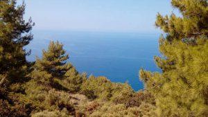 Mavi deniz ağaçlar arasından
