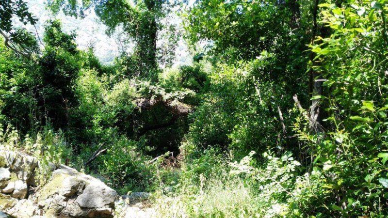 Olimpos Ormanı