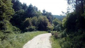 Aydos Ormanı ve Mesire alanı