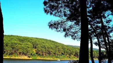 Photo of Aydos Ormanı Mesire Alanı Giriş Ücreti 2020