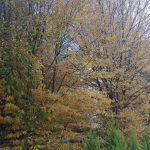 Çilingöz Tabiat Parkı (1)