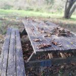 Çilingöz Tabiat Parkı (11)
