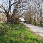 Çilingöz Tabiat Parkı (12)