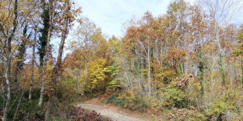 Çilingöz Tabiat Parkı