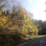 Çilingöz Tabiat Parkı (37)