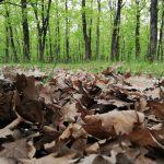 İğneada Longoz Ormanları Milli Parkı (1)