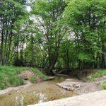 İğneada Longoz Ormanları Milli Parkı (10)