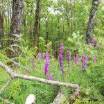 İğneada Longoz Ormanları Milli Parkı (3)
