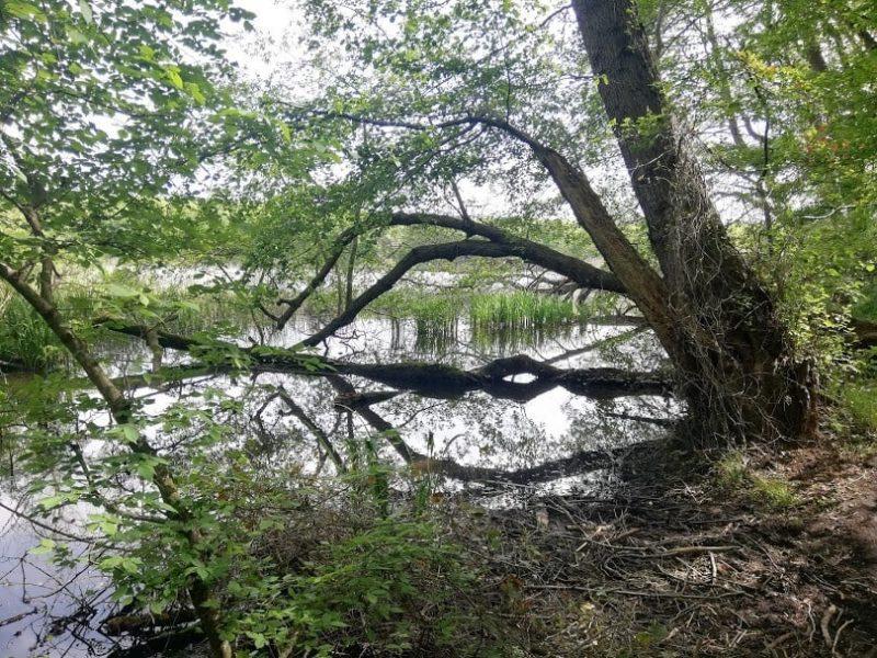 İğneada Longoz Ormanları Milli Parkı (5)