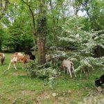 İğneada Longoz Ormanları Milli Parkı (6)