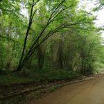 İğneada Longoz Ormanları Milli Parkı (7)