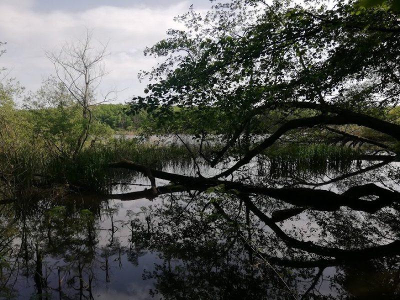 İğneada Longoz Ormanları Milli Parkı (8)