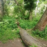 İğneada Longoz Ormanları Milli Parkı (9)