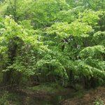 İğneada Longoz Ormanları Parkı (1)