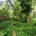 İğneada Longoz Ormanları Parkı (10)