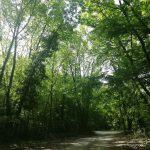 İğneada Longoz Ormanları Parkı (12)