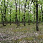 İğneada Longoz Ormanları Parkı (16)