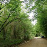 İğneada Longoz Ormanları Parkı (2)