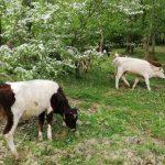 İğneada Longoz Ormanları Parkı (4)