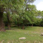 İğneada Longoz Ormanları Parkı (5)