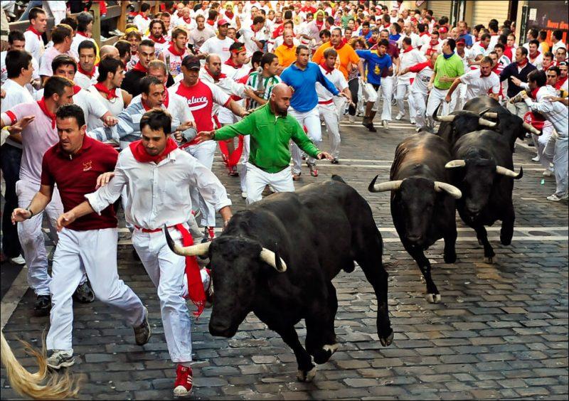 boğa festivali