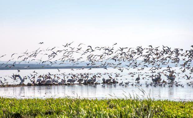 kuş cenneti milli parkı