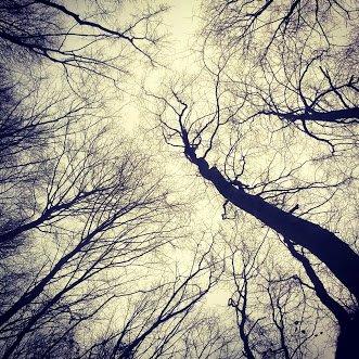 Polonezköy Ormanı yaprak dökmüş ağaçlar