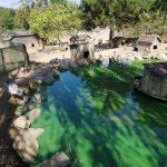 Polonezköy Hayvanat Bahçesi (42)
