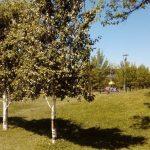 Sazova Parkı (22)