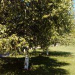 Sazova Parkı (26)