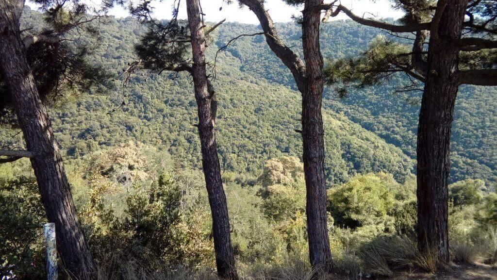 Kaleden orman manzarası