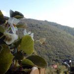 Yoros Kalesi – Anadolu Feneri – Yusa Tepesi (16)
