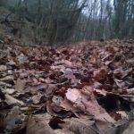 Kışın Polonezköy (2)