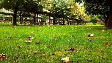 Photo of Polonezköy Mangal Yapılacak Yerler ve Polonezköy Piknik Yeri Tavsiye
