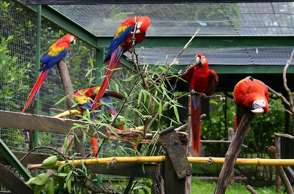 Papağan evi