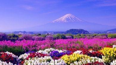 Photo of Görünce Mutlu Olacağınız İlkbahar Fotoğrafları